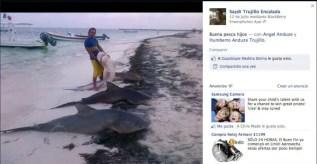 Fotos y videos: Masacran a Tiburón Toro en Riviera Maya