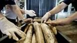 Información que debes conocer sobre el tráfico ilegal de animales - Fotos