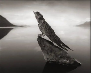 Fotos: Conoce el lago que convierte en estatuas a seres vivos