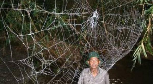 La tela de araña más grande y resistente del mundo