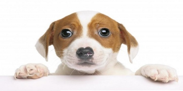 Carta De Despedida De Un Perro A Su Dueño
