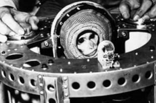Irán lanzará un mono al espacio el próximo mes - Fotos