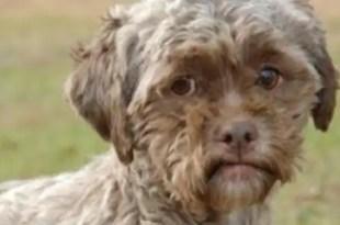 Insólito: Abandona a su perro porque tiene cara de humano - Fotos