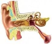 Consejos para aliviar el dolor de oídos