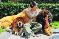 Insólito: Pagan 1,4 millones de euros por un perro-2