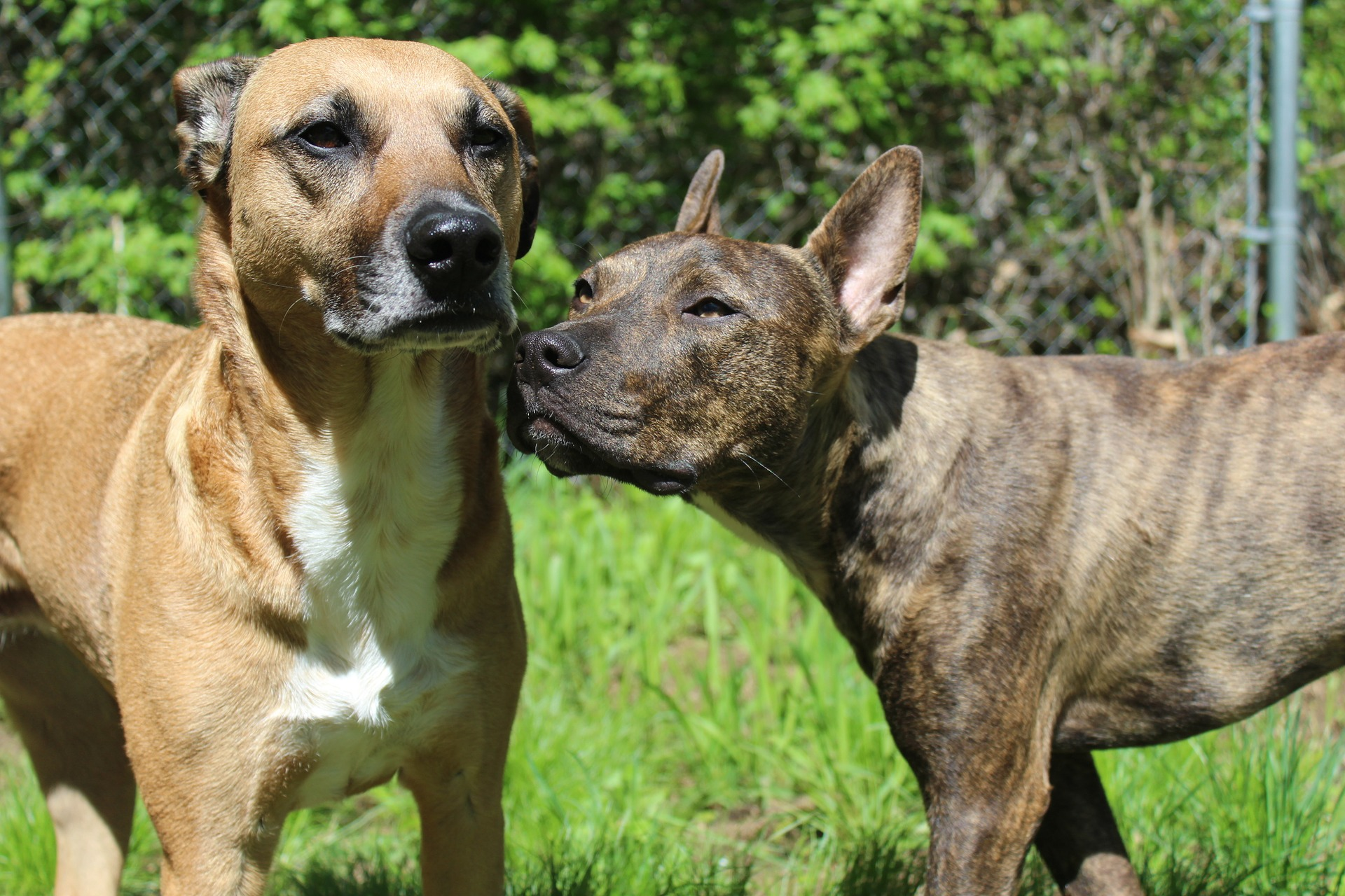 3 Ways Dogs Help People Connect Project Pawsitivity