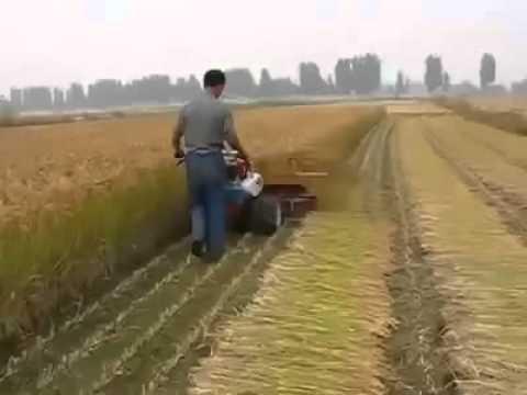 crop cutting