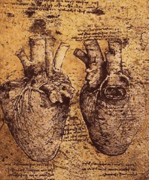 Da Vinci's drawing of an anatomical heart (Source: Wikimedia Commons)