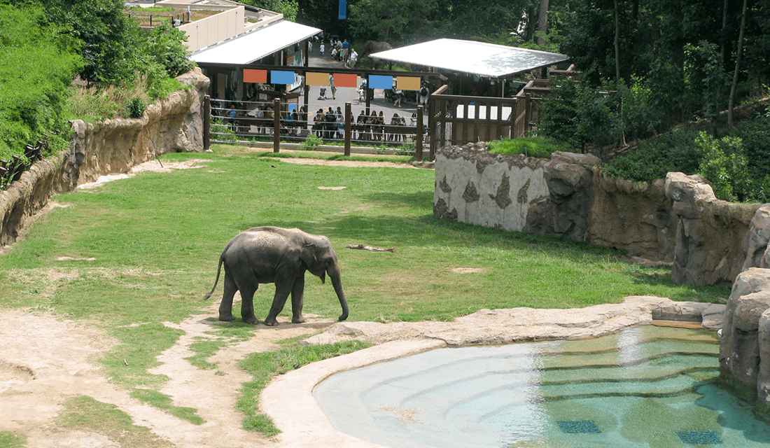 Elephant Enclosure at the National Zoo in Washington, D.C. (Source: PJA Architects)