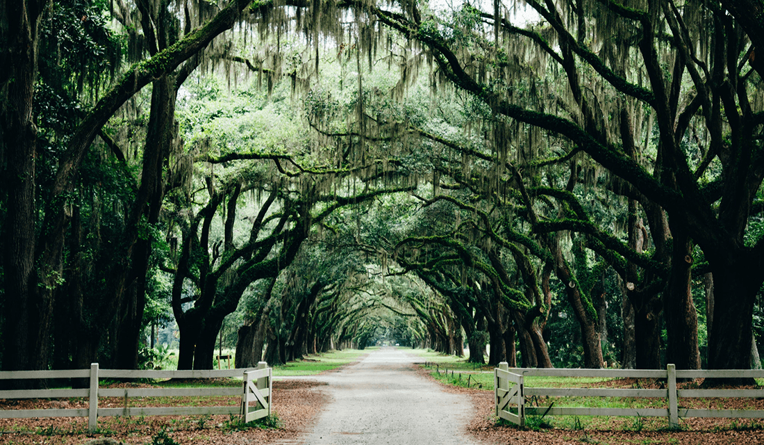 Southern Landscape in Savannah, GA
