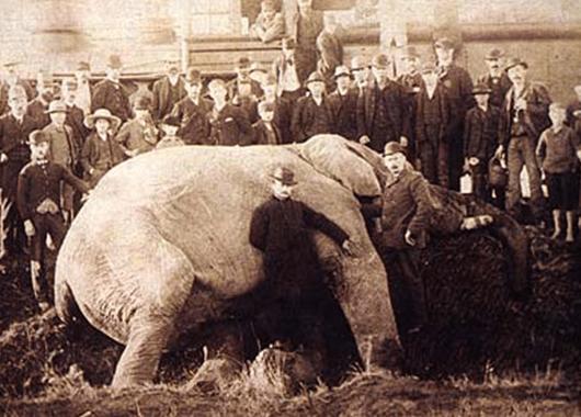 Jumbo's Death in 1885 (Source: Wikipedia)