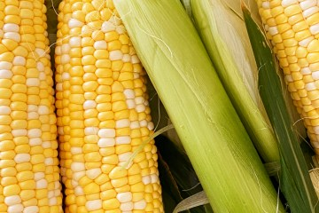 Corn on the Cob Instant Pot | Corn on the Cob | Corn on the Cob How to Cook | Instant Pot Corn on the Cob Recipe | Instant Pot Corn on a Cob | Instant Pot Corn on the Cob Fresh | How to Cook Corn on the Cob | Want to know the easiest way to cook corn on the cob? Cooking corn in the instant pot is super easy and one of the easiest ways to cook corn. Learn how to do it with these simple steps! #corn #cornonthecob #instantpot #instantpotrecipes #howto #recipeoftheday #tutorial