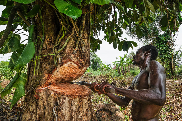 On top of that, this rainforest covers about 70% of the congolese territory. Deep In The Jungle Scientists Explore The Links Between The Congo And Climate Change