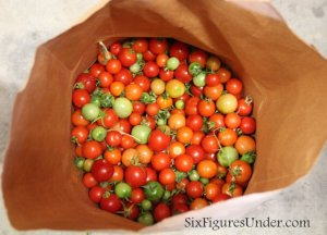 How to pick and store green tomatoes so you can have tomatoes ripening in the winter!