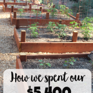 The Garden Project (What we did with our stimulus check)