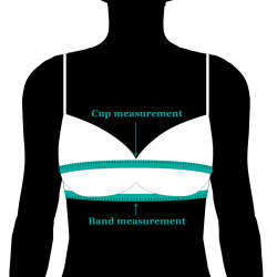 bra size measuring