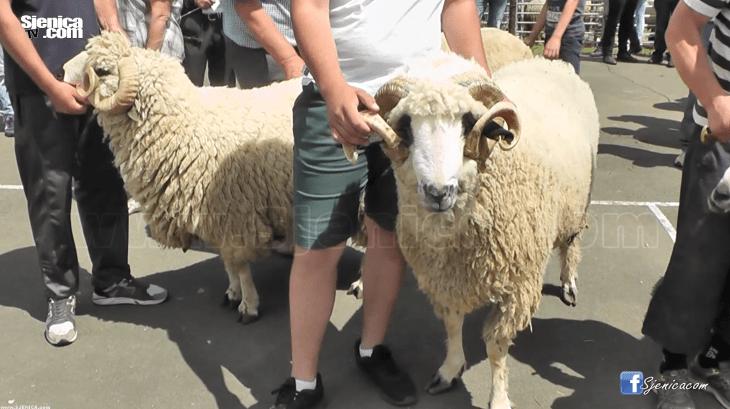 13. poljoprivredni sajam u Sjenici - Sjenica Jun 2016