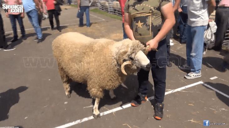15 sajam poljoprivrede u Sjenici - Sjenica Jun 2018