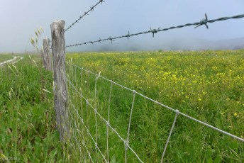 Barbed Fence Flower Time