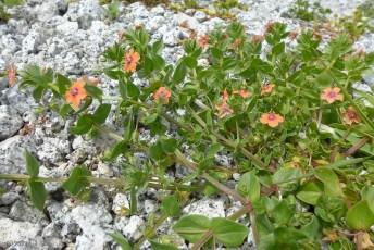 Orange Flowers in Rocks