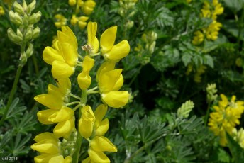 Yellow Flower Stem