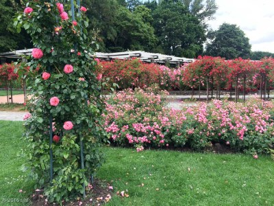 But my fav was the rose garden.