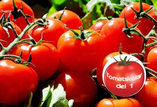 Tomater på kvist