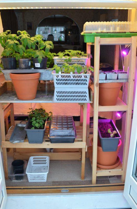 Odlingsstation - hyllor med belysning och odling