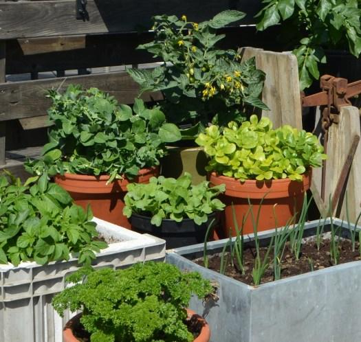 Trädgård i kruka