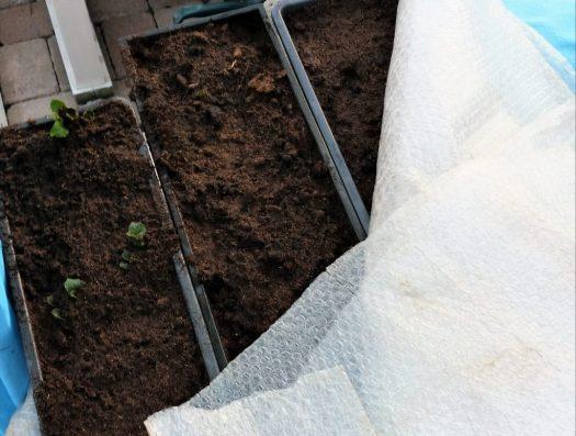 Bubbelplast runt potatislådor som skydd