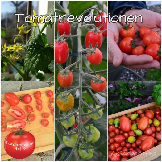 tomatrevolutionen
