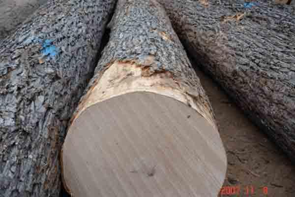 skateboard maple wood