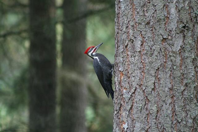 Specht am Baum sitzend