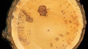 Eine Karte oder ein Stück Holz