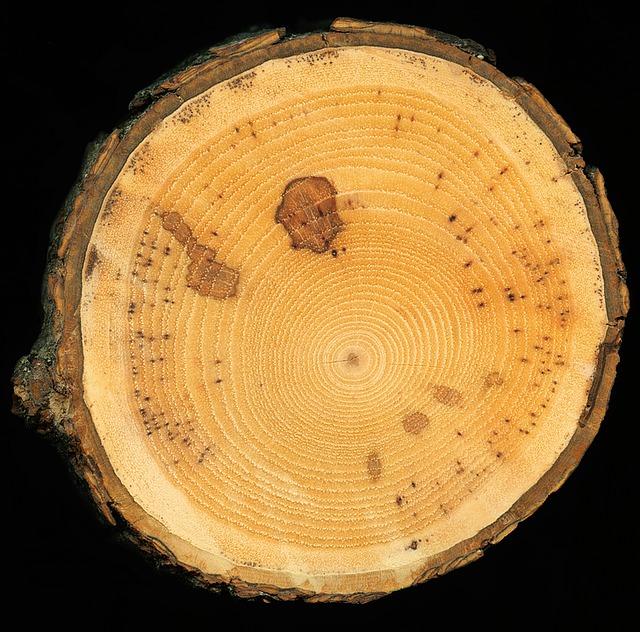 ein Stück Holz