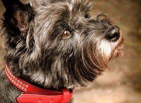 Armer Hund ohne Halsband