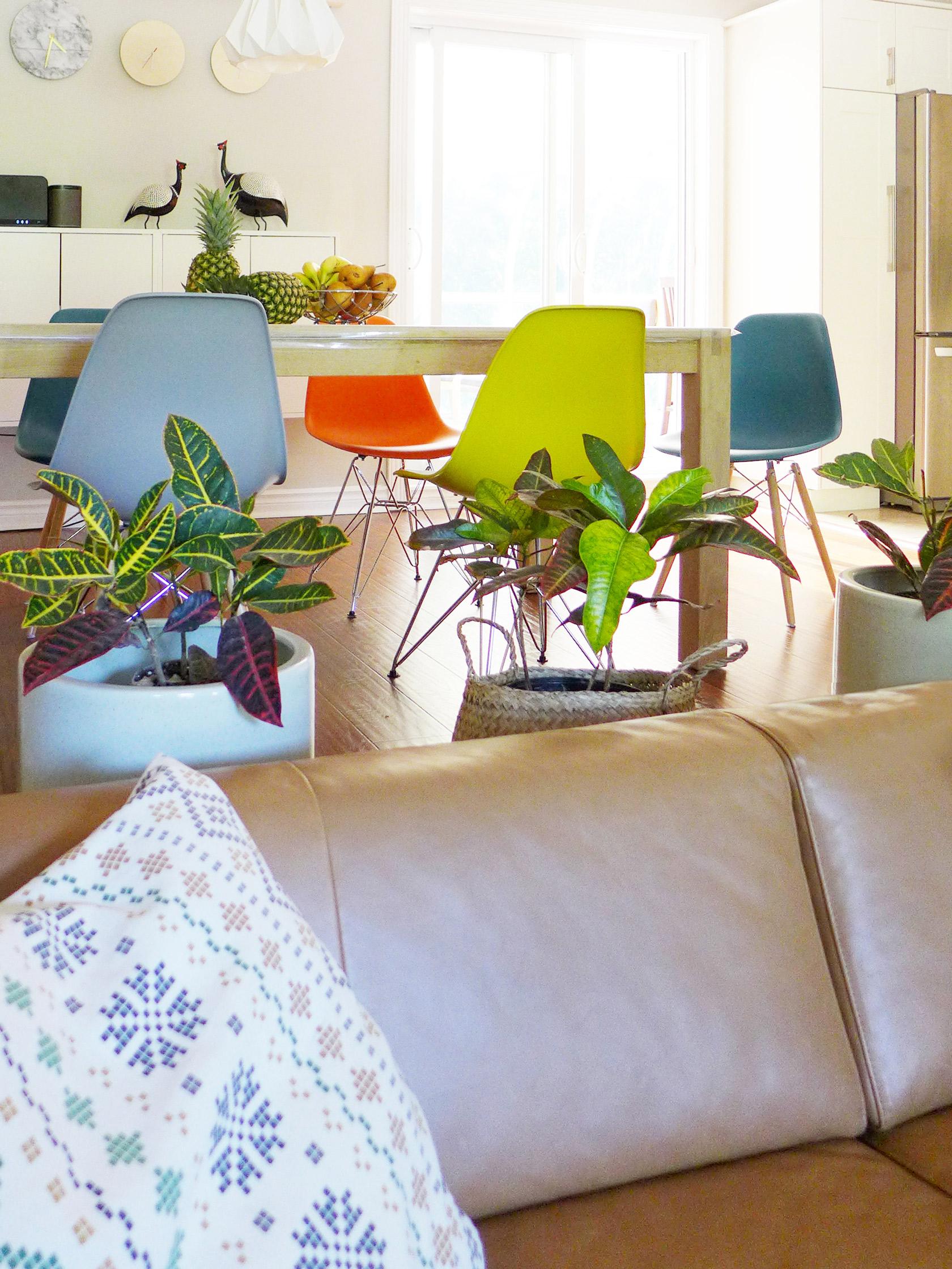 Réalisation du studio d'architecture et de décoration Skéa Designer. Velouté. Derrière le canapé, la salle à manger, sa table en bois, ses chaises multicolores et ses plantes.