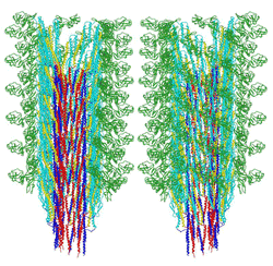 the structure of the flagellar filament