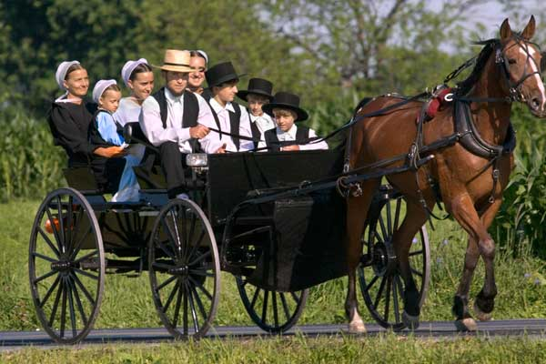 are gmo s bad does low cancer amongst amish prove that skeptical