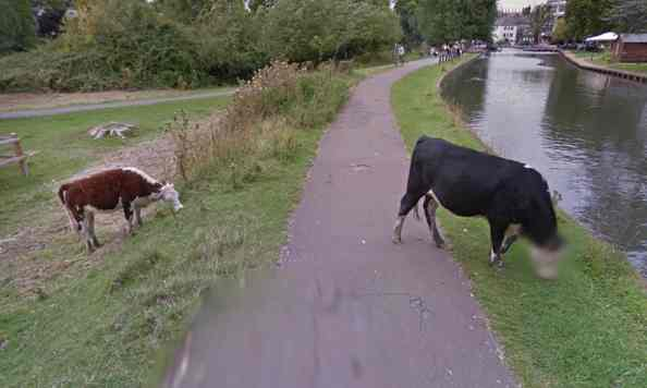Protecting the privacy of cows