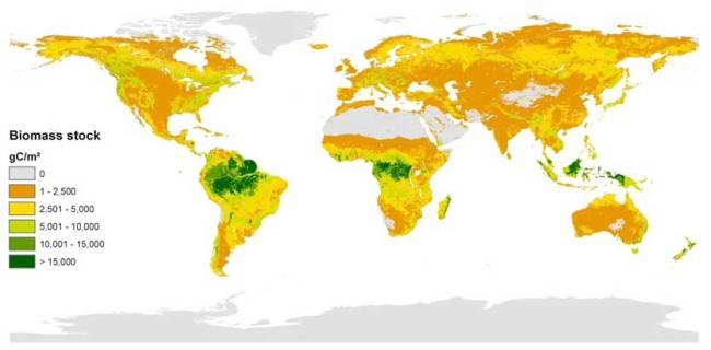 vegetation biomass