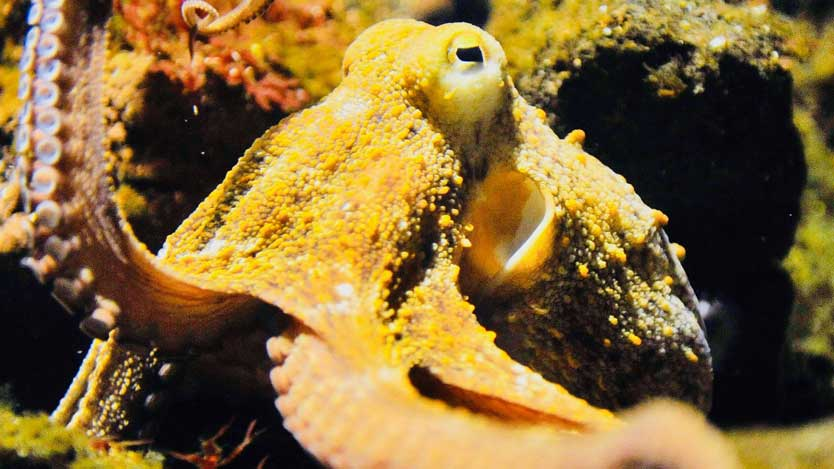 33 scientists claim Octopuses came from outer space