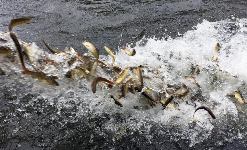 Earth's fish are disappearing because of climate change