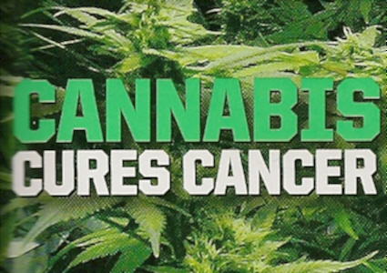 """Résultat de recherche d'images pour """"cannabis cancer cure"""""""