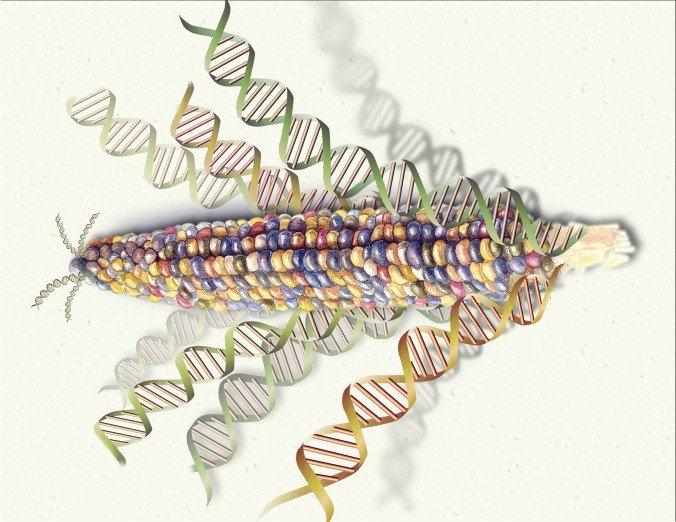 Ten thousand years of GMO foods