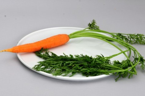 Carrot after ten thousand years of GMO foods