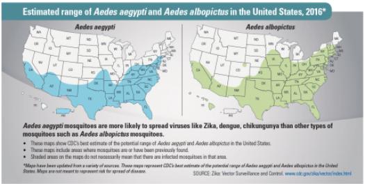 DDT facts