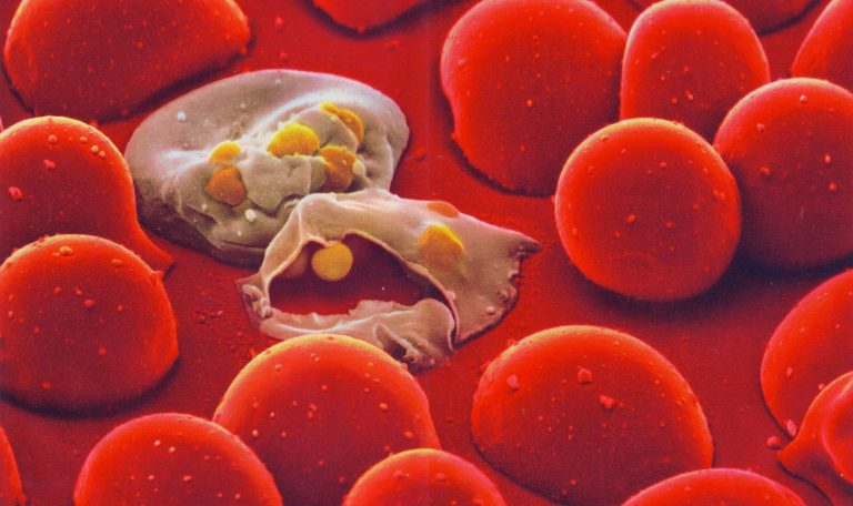 malarial cell DDT effects