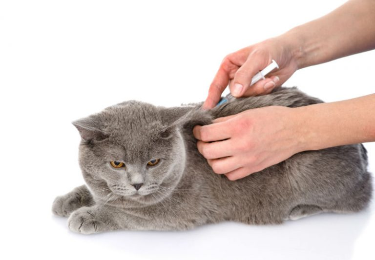 Vaccinations In Cats And Dogs