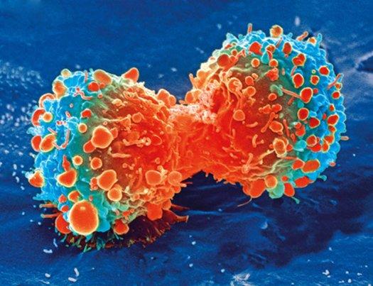 cancer myths